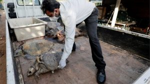Sri Lanka: Hundreds of sea animals washed ashore after ship disaster