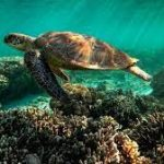 Why is the Great Barrier Reef in trouble? A simple guide